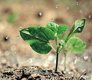 plant-in-rain
